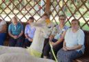 Alpakoterapia w ŚDS Czarnowo