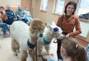 Alpakoterapia