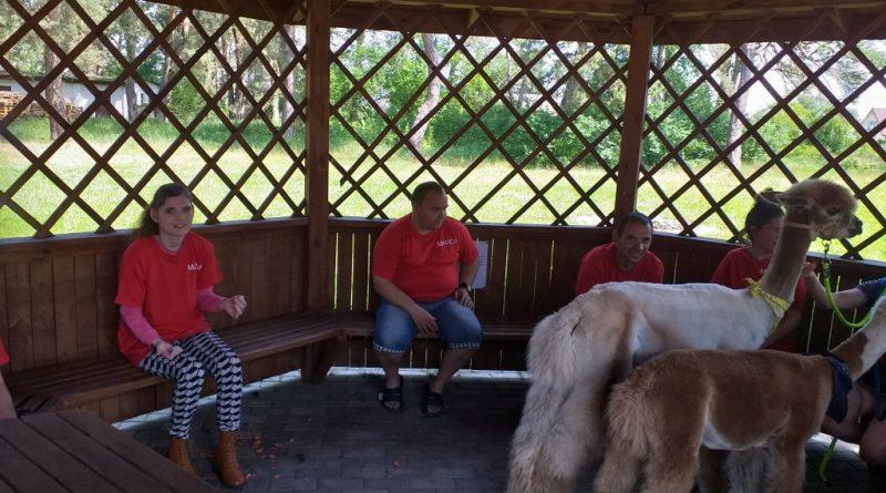 Gościliśmy Alpaki po dłuższej przerwie